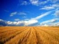 Proiect de hotarare: Guvernul discuta acordarea de ajutoare de 15 000 de euro pentru producatorii de rosii si producatorii de usturoi