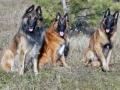 Amenzi de până la 2500 de lei pentru cei care-şi lasă câinii nesupravegheaţi în spaţiul public