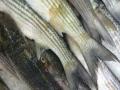 "Campania UE ""zero toleranta"" impotriva pescuitului ilicit se inaspreste"