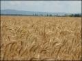 Modificari Codul Fiscal: Guvernul a adoptat taxarea inversa pentru livrarea, in interiorul tarii, a cerealelor si plantelor tehnice
