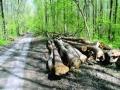 Parchetul de pe langa Judecatoria Topoloveni - Arestare preventiva pentru taiere, furt de arbori si ultraj